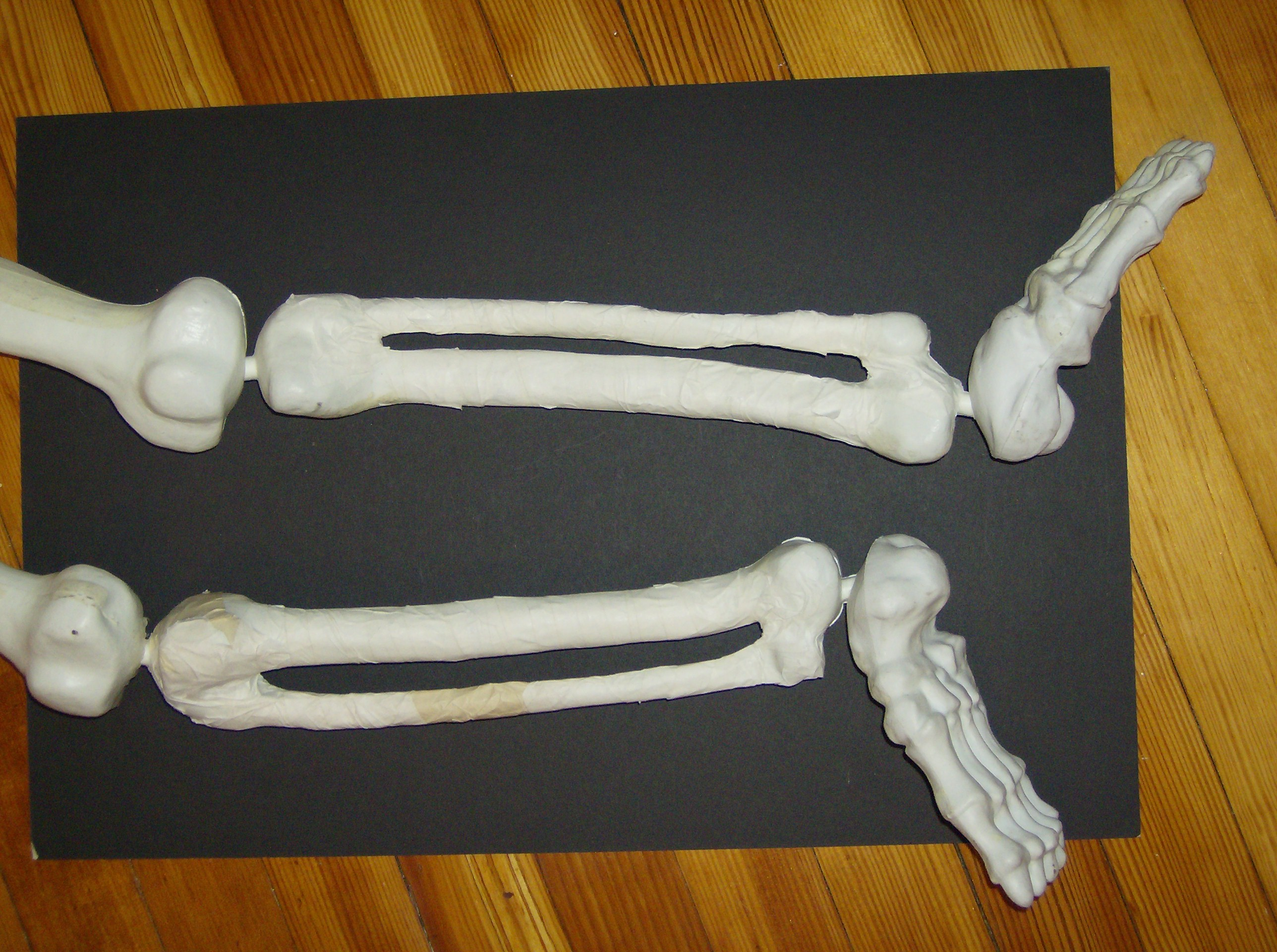 Bones In Upper Back Images | TheCelebrityPix